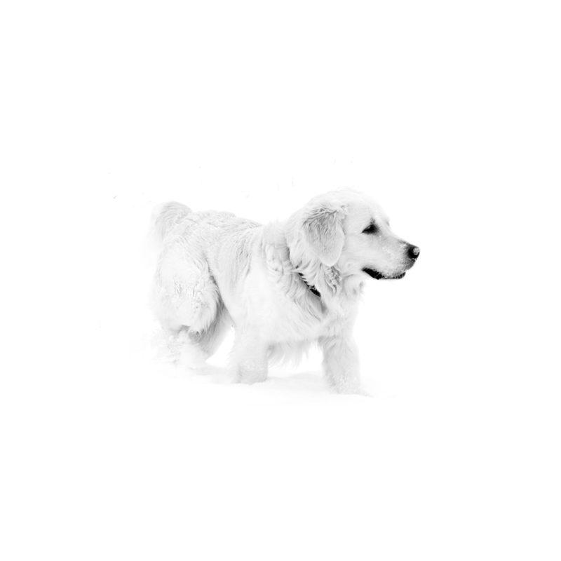 Фотография собаки на белом фоне